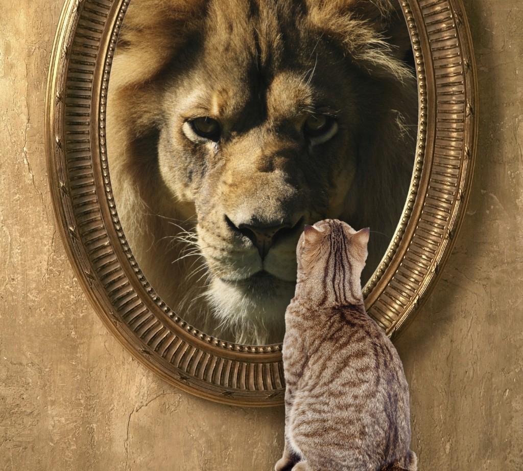 Cat in front of mirror