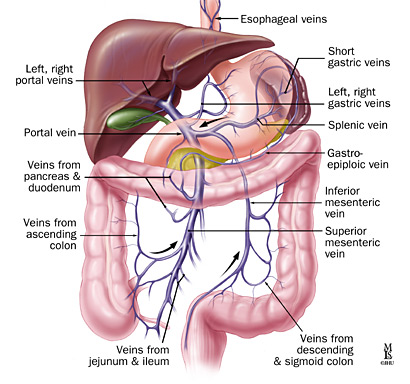 Source: imageradiology.blogspot.com