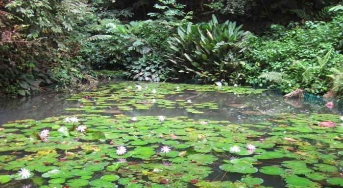 lily pond penang hike